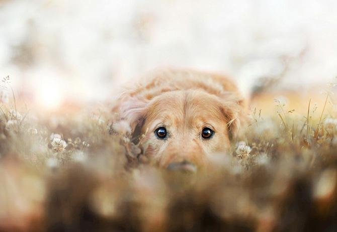 Endearing Animal Portraits By 18 Year Old Photographer Jessica Trinh | Fstoppers