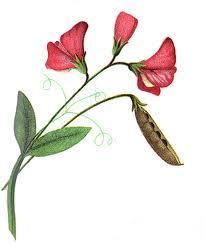 Результат поиска Google для http://karenswhimsy.com/public-domain-images/flower-clipart/images/flower-clipart-8.jpg