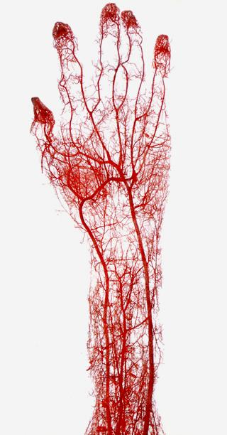 Veins in a hand