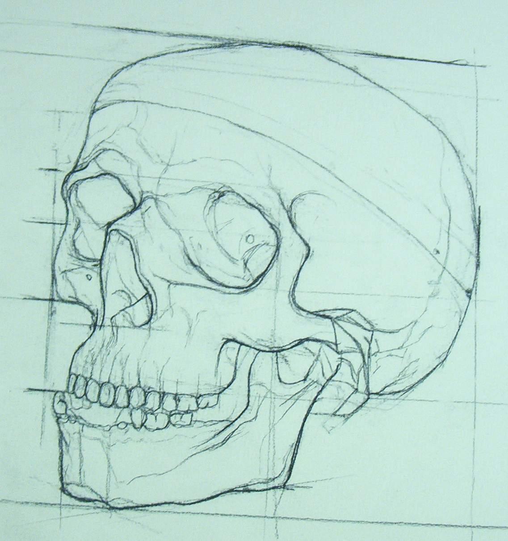 Skull... by ~Clukyrat