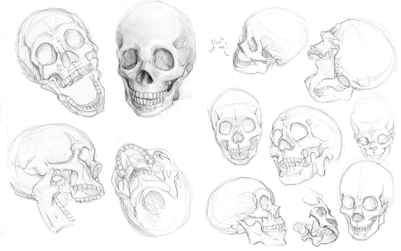 Skulls by `hibbary