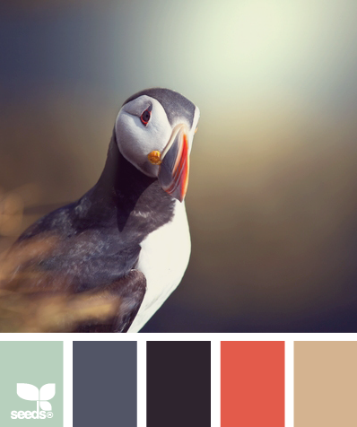 Design Seeds® | for all who ? color | puffin palette