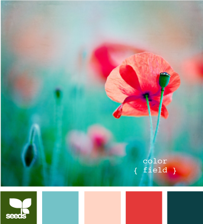 Design Seeds® | for all who ? color | color field