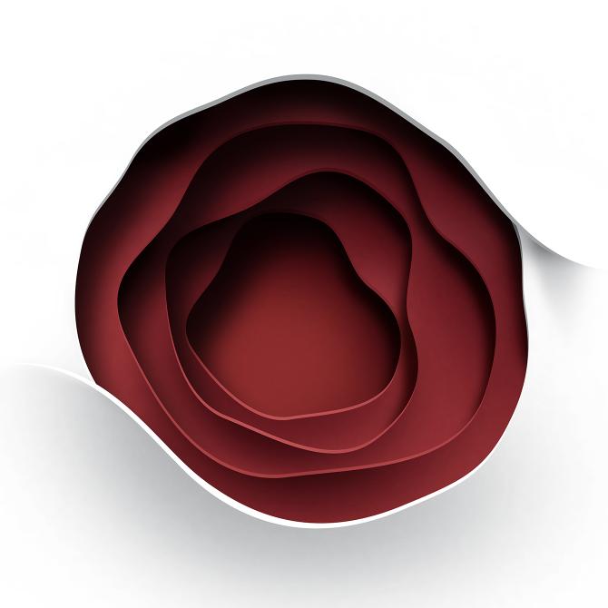 Rose illustration - Dado Queiroz - Lettering, design and illustration
