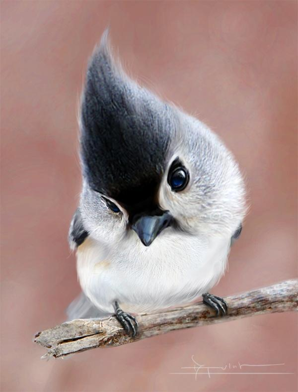 Picture of a tufted titmouse | Wonderful Places