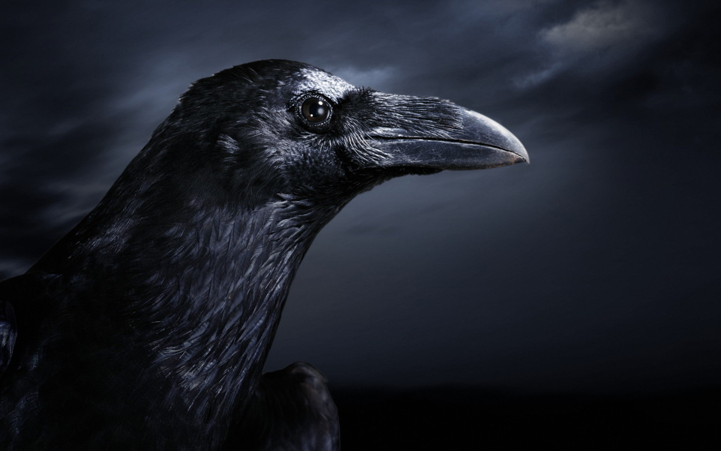 Google Image Result for http://www.zastavki.com/pictures/1440x900/2011/Animals_Birds_Raven_027484_.jpg