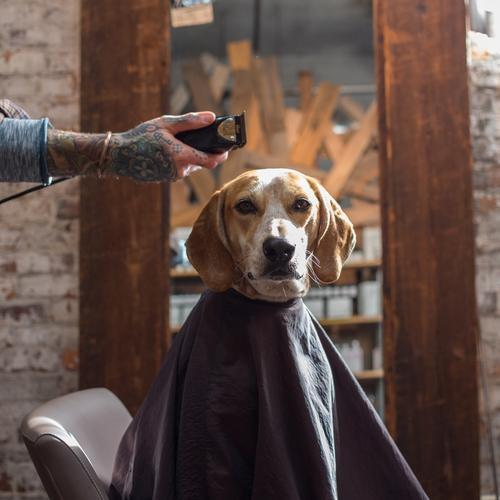 Maddie the Coonhound @ ShockBlast