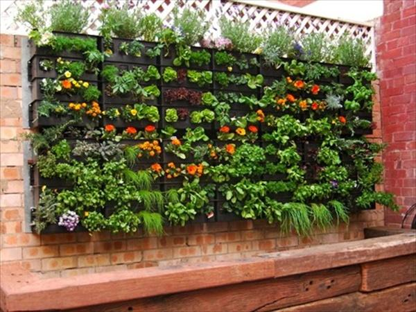 Pallet Vegetable Garden Ideas
