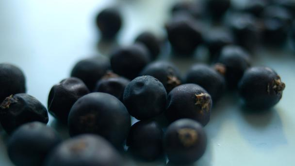 Google Image Result for http://www.bbc.co.uk/food/images/food_16x9_608/foods/j/juniper_berries_16x9.jpg