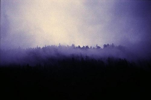 A STRANGE FOREST