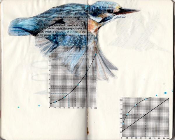 Birds in Books | Colossal