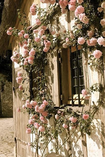 Garden / Pretty.