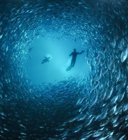 50 Stunning Underwater Photos - Smashing Magazine | Smashing Magazine