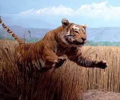 tiger - Google Search