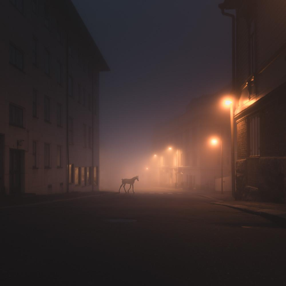 500px / Foal by Mikko Lagerstedt