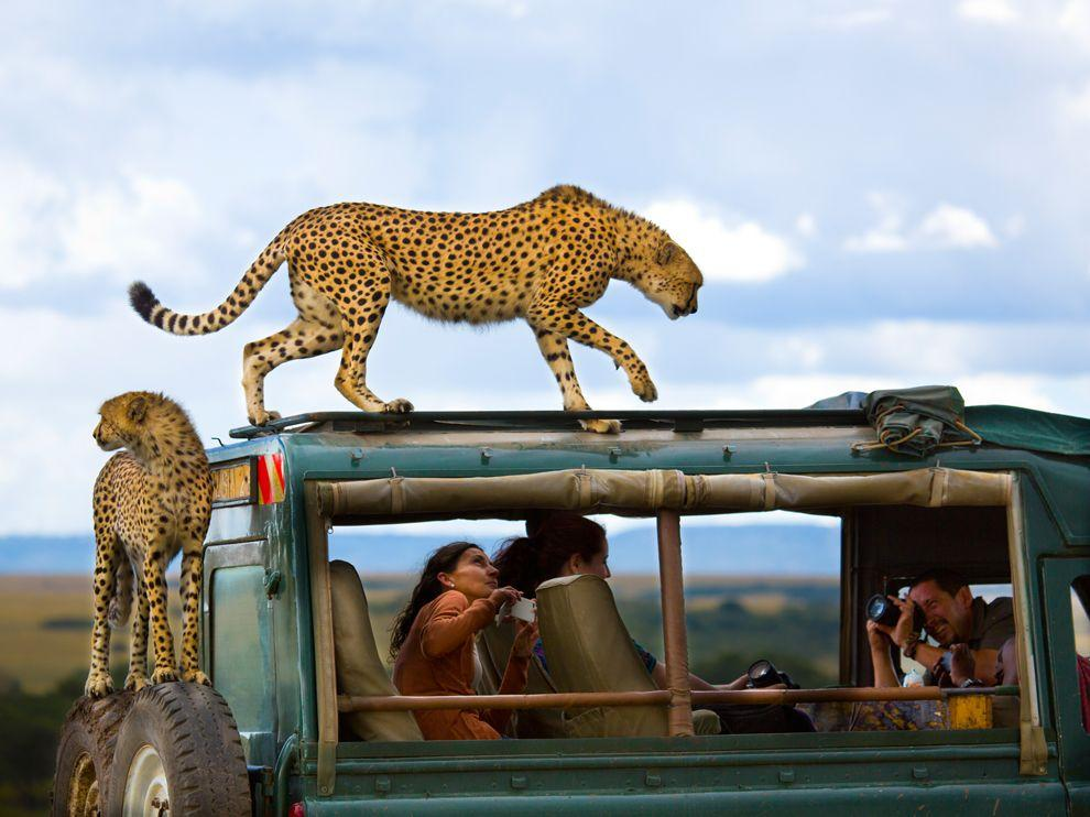 Cheetah Picture -- Masai Mara Photo -- National Geographic Photo of the Day