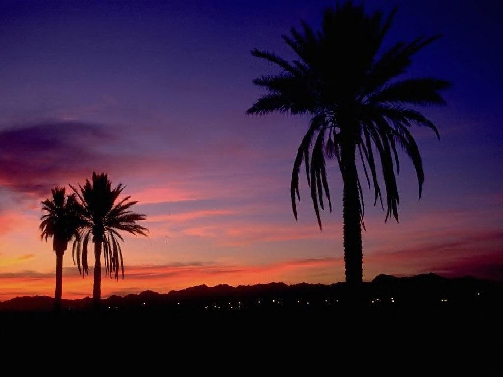 Desktop Wallpaper · Gallery · Travels · Semi tropical sunset, Arizona | Free Background 1024x768