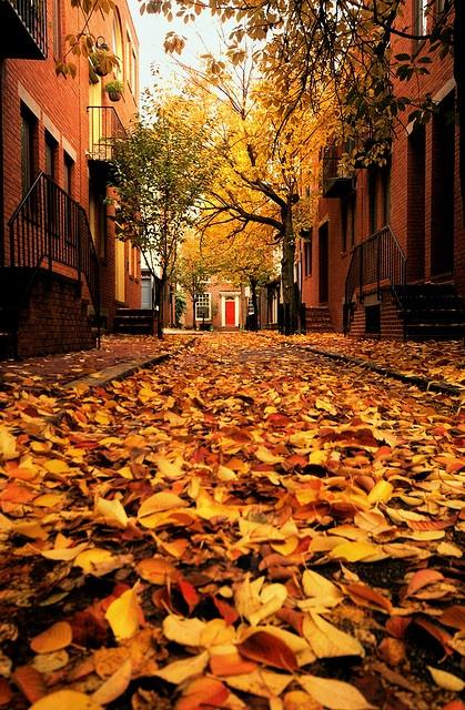Philadelphia in the fall | Fall