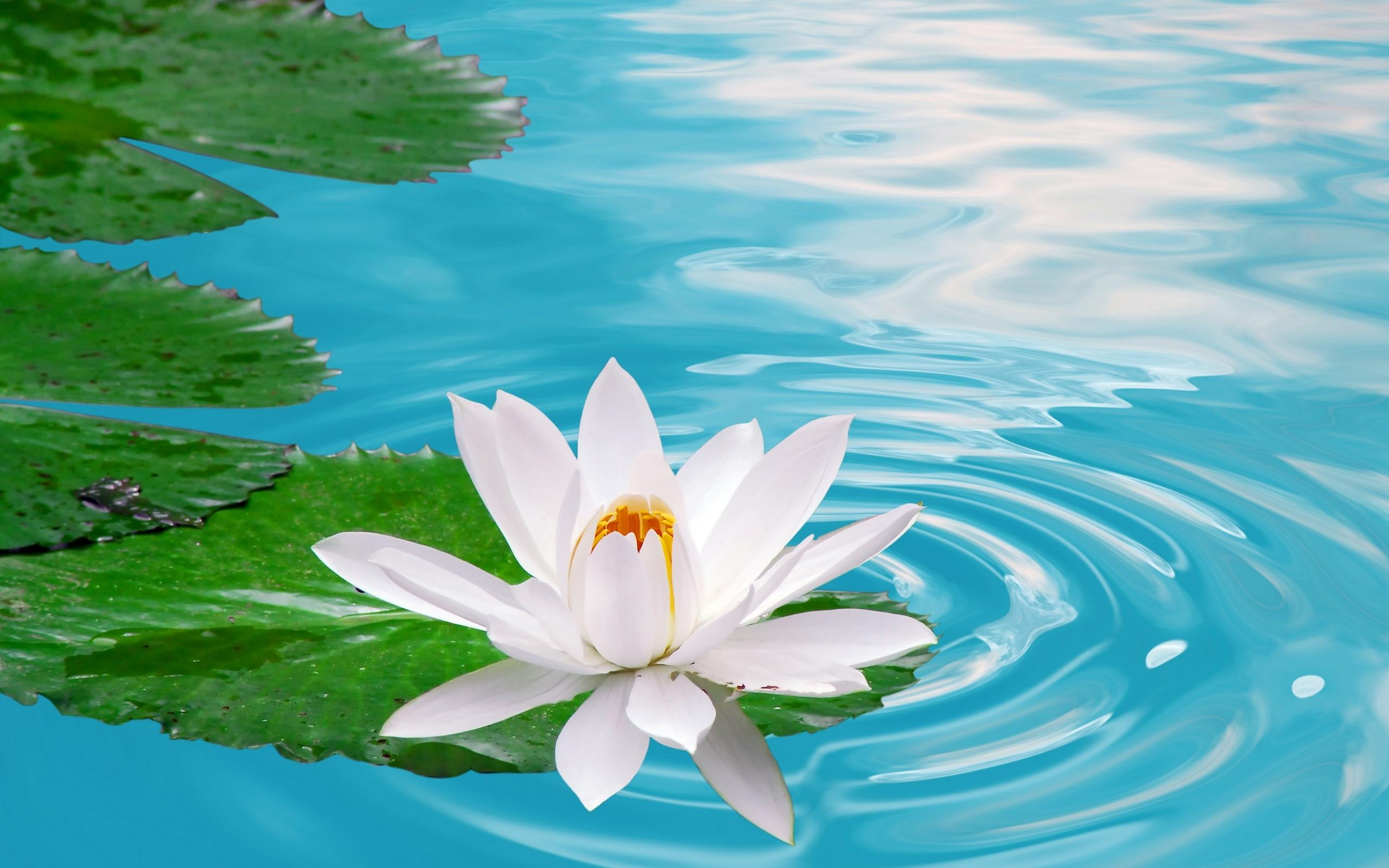potato-high-definition-flowers-hd-n-1231546 (jpeg image, 2560