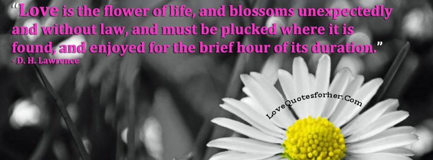 Love is the flower of life - Inspirational love quote for her and him