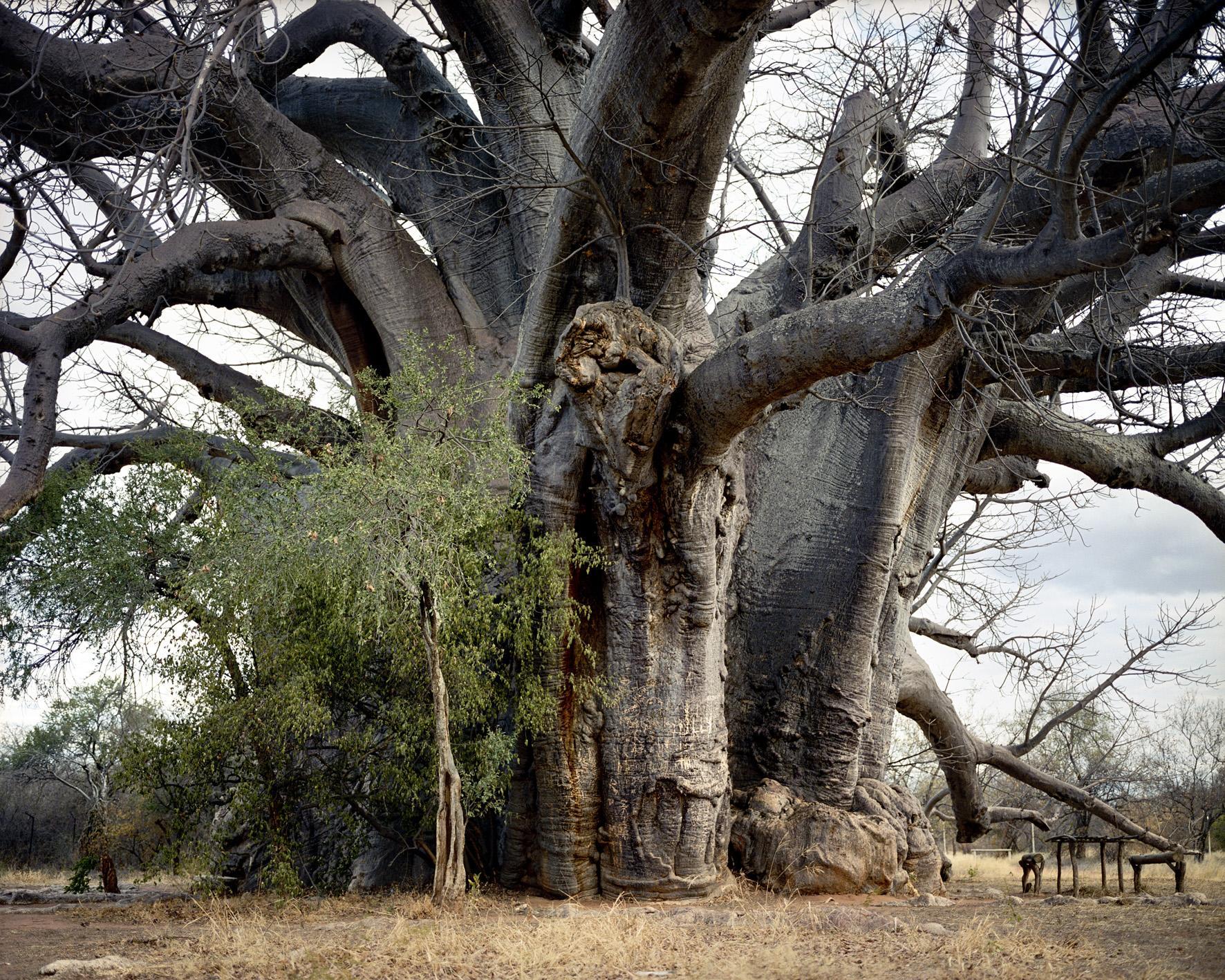 Les organismes vivants les plus vieux du monde | La boite verte