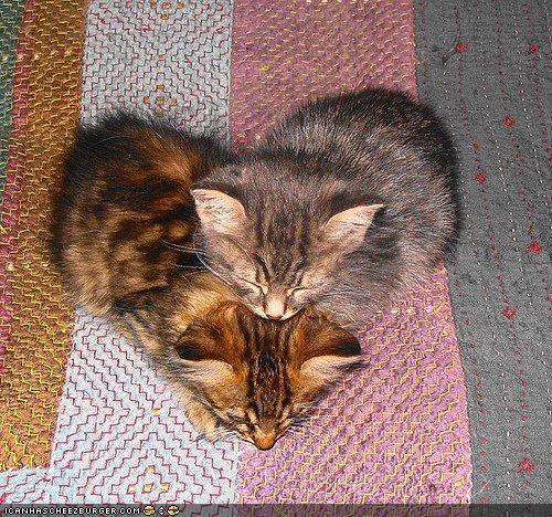kitty love - Imgur