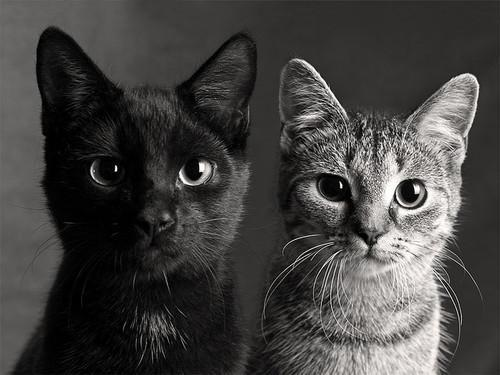 black, cat, cute - inspiring picture