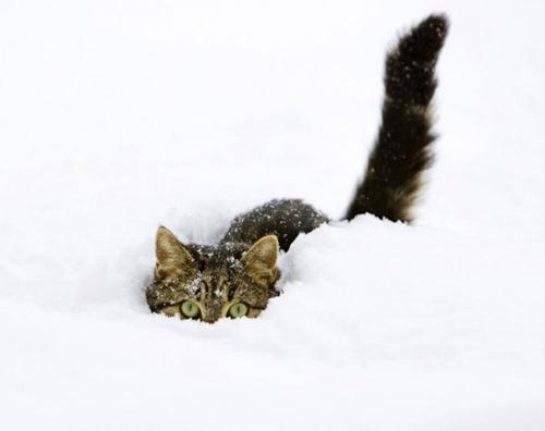 animal, cat, cute, kitten, snow - inspiring picture