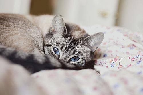 blue eyes, cat, cute, kitten, photo - inspiring picture