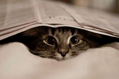 cat, gato, jornal - inspiring picture