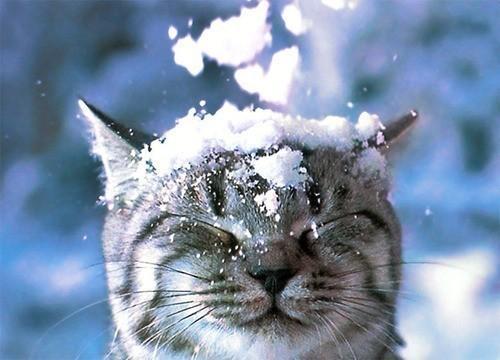 cat, cute, snow, winter - inspiring picture