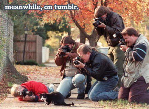 cameras, cat, funny, humor, joke - inspiring picture