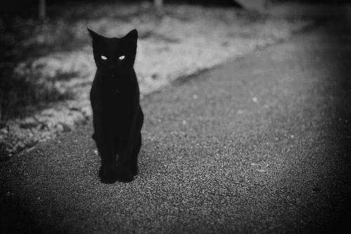black, black and white, cat, stephanie$ - inspiring picture