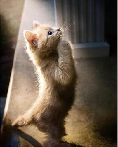 cat, cute, pray - inspiring picture