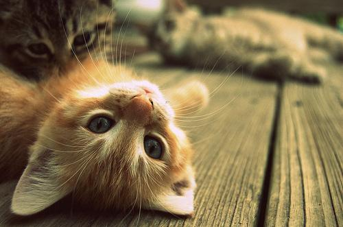 cat, cats, cute, kitten, photography - inspiring picture
