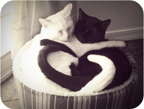 black and white, cat, cats, cute, heart, hug - inspiring picture