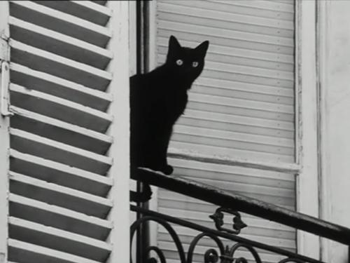 b&w, black and white, black cat, cat, les amants reguliers - inspiring picture