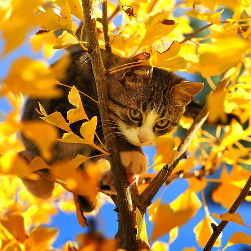 autumn, cat, cat on tree, cute, fall, golden leaves - inspiring picture