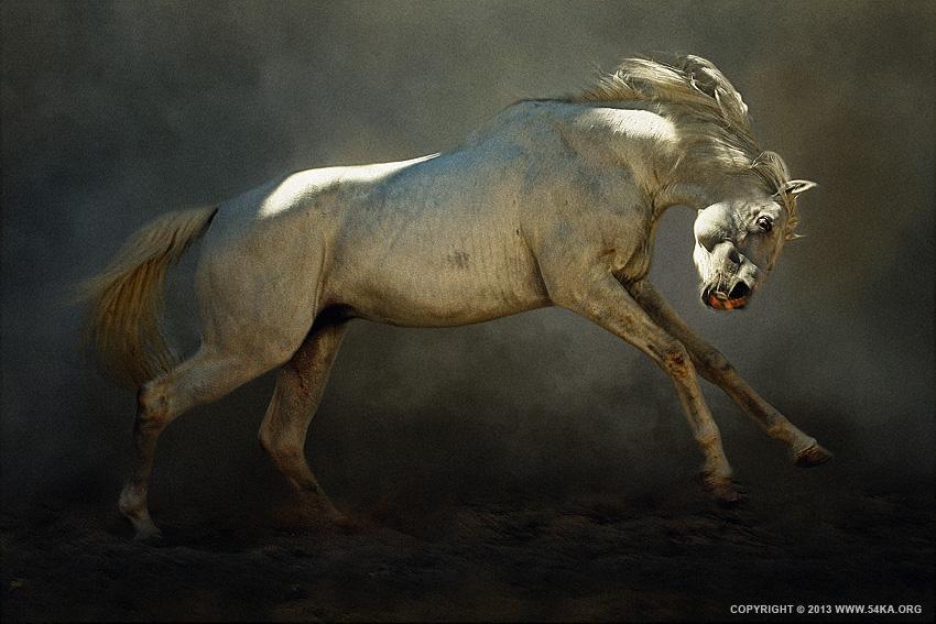 Mad Horse - 54ka [photo blog]