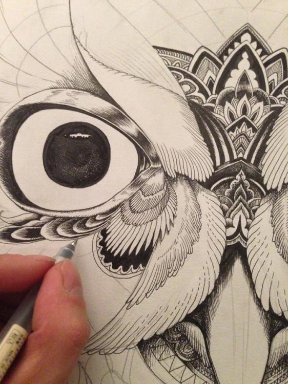 Owl Portraits by Ian MacArthur | koikoikoi