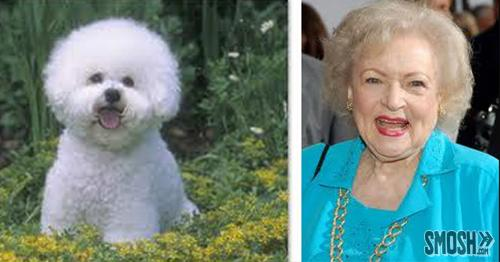 15 Celebrities Who Look Like Dogs | Smosh