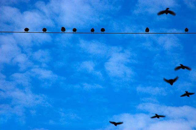 Ptaki_6207 | Flickr - Photo Sharing!