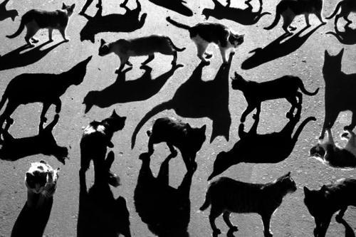 Designspiration — DeadFix » cats
