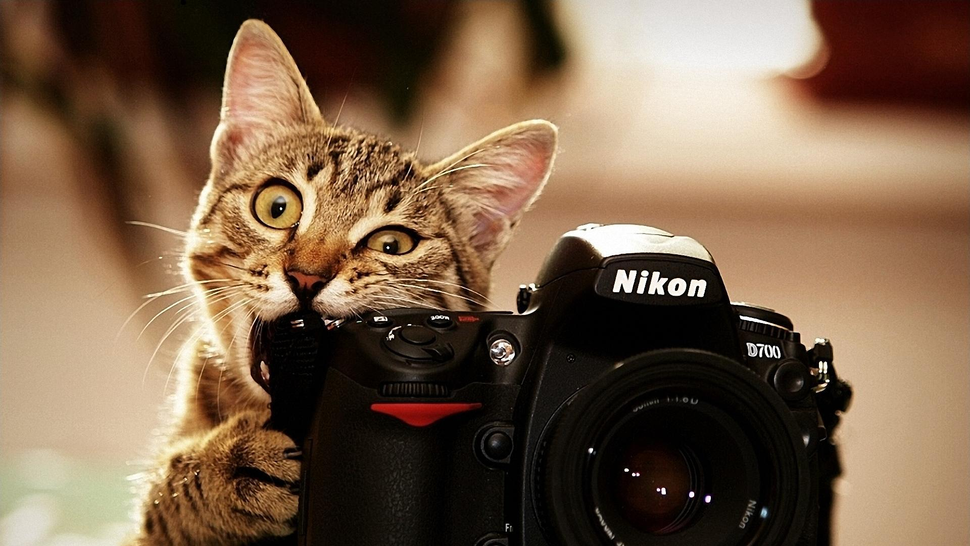 Say cheese! - Imgur