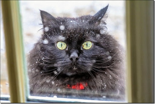 22 Cats Who Are Too Proud To Admit They Hate Snow