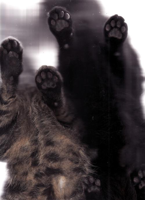 cat6.jpg (JPEG Image, 500×688 pixels)