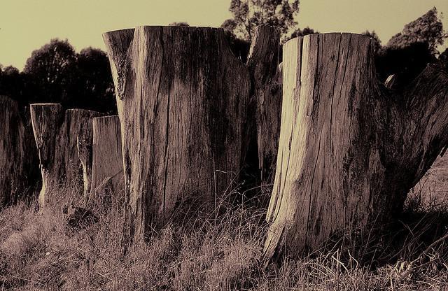 stumps | Flickr - Fotosharing!