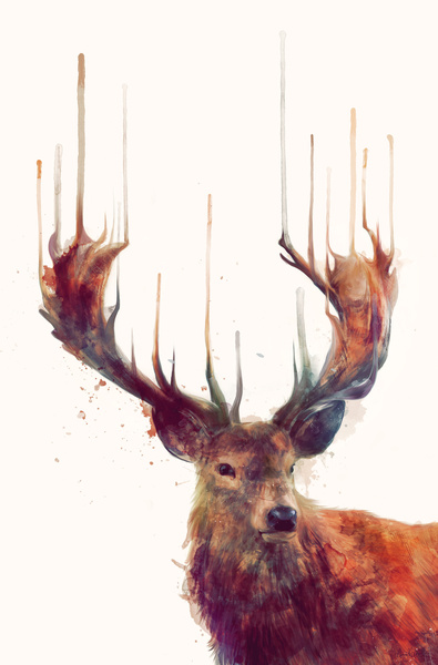 Gorgeous Animal Illustrations by Amy Hamilton | Inspiration DE