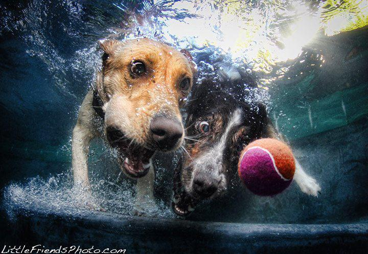 Just two diving dogs - Imgur
