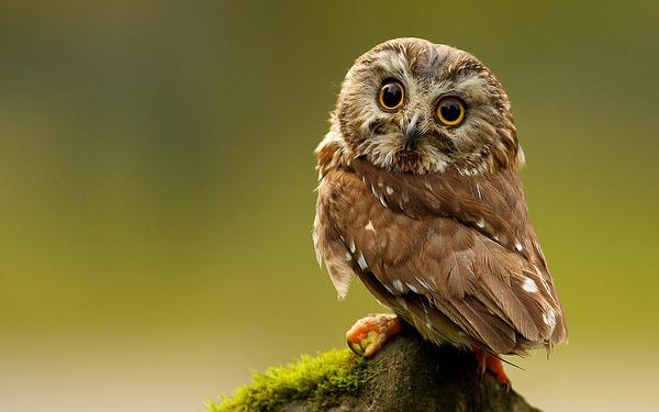 45 Beautiful Examples of Animal Photography | InspireFirst